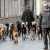 Is dog population in Srinagar really decreasing? SMC says it has reduced from 90,000 to 22000