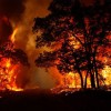 Forest fires kill at least 7 in Greek near Athens