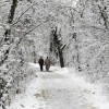 Higher reaches of Kashmir receive fresh snowfall