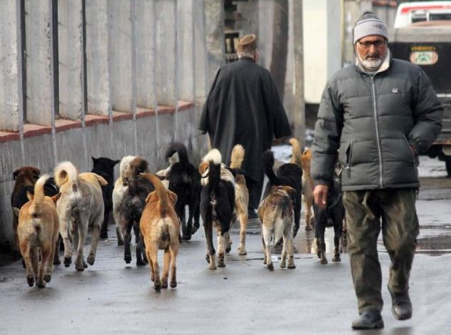 Street dogs bite four people in Handwara