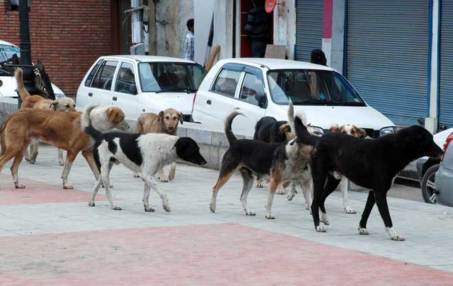 'Govt to start mass sterilization of dogs in Srinagar'