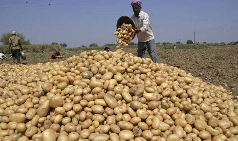 Govt decides to import 10 lakh tonnes of potatoes to calm rising prices