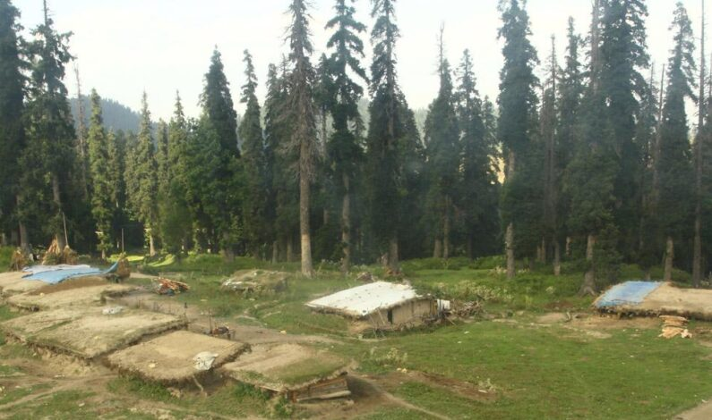 In a first, Centre gives clearance to use of forest land for non-forestry purposes in J&K