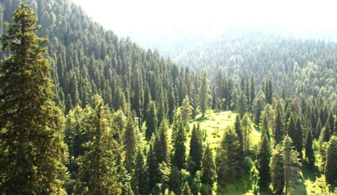 Forest cover in J&K reduces by 420 Sq Kms between 2015-19: Govt