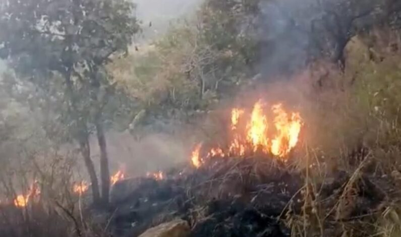 Forest Fire Triggers Landmine Blasts Along LoC in Mendhar